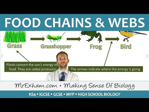 Ecology - Food Chains And Food Webs - GCSE Biology (9-1)