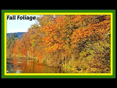 Fall Foliage Video in Harrisburg Pennsylvania! #FallScenery