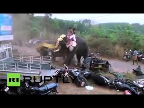 India: Elephant goes on rampage during holy festival at Bhagavathi Temple