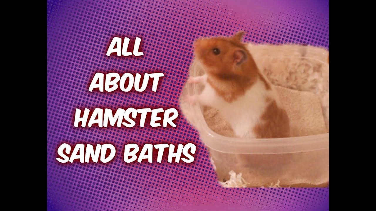 Hamster Supplies: Everything You Need For A Pet Hamster