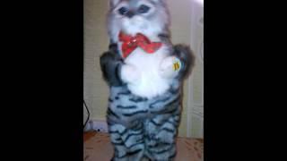 Поющий кот))) Прикольная поющая игрушка...