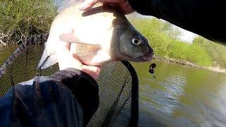 5 видов рыб за одну рыбалку! Лещ на микроджиг! Рыбалка в Калининграде.