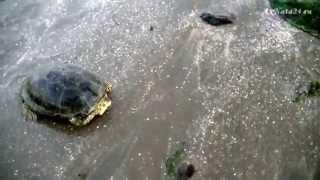 видео Курорты на Каспийском море, Азербайджан: отзывы, фото