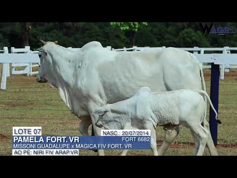 LOTE 07   FORT 6682