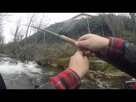 trout fishing toc