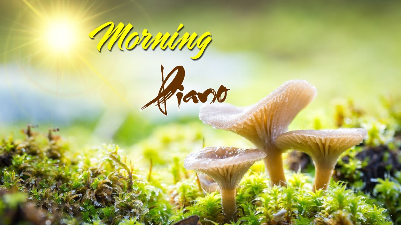 Morning Relaxing Music - Piano Music With Birds Singing For Stress Relief, Study, Meditation, Yoga