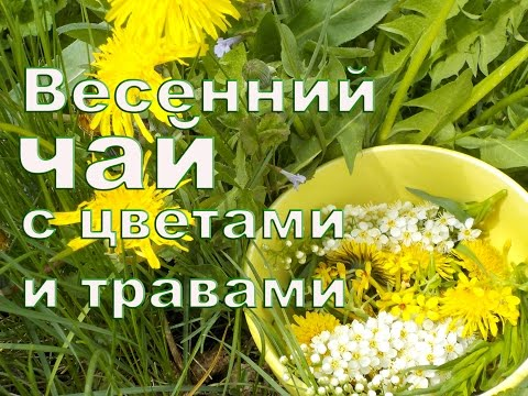 одного цветка одуванчика картинка