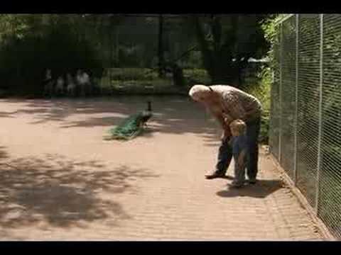 Jona met opa en oma vermaak in de dierentuin