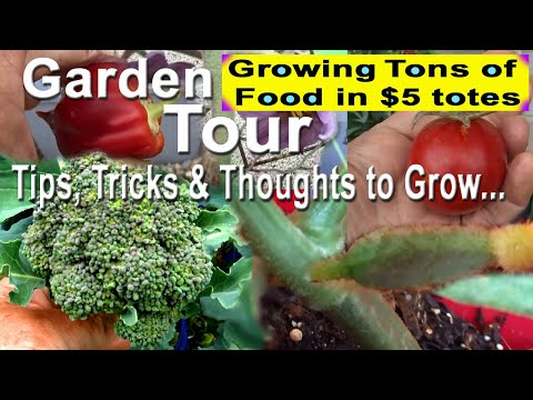 Vegetable Garden Tour TIPS Growing Tomatoes Cucumbers, Broccoli, Onions, Lettuce Container Gardening