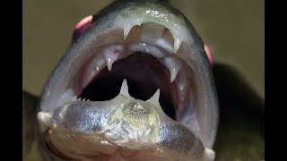Рыба откусывает крючки Первый день весны Южн Водохранилище