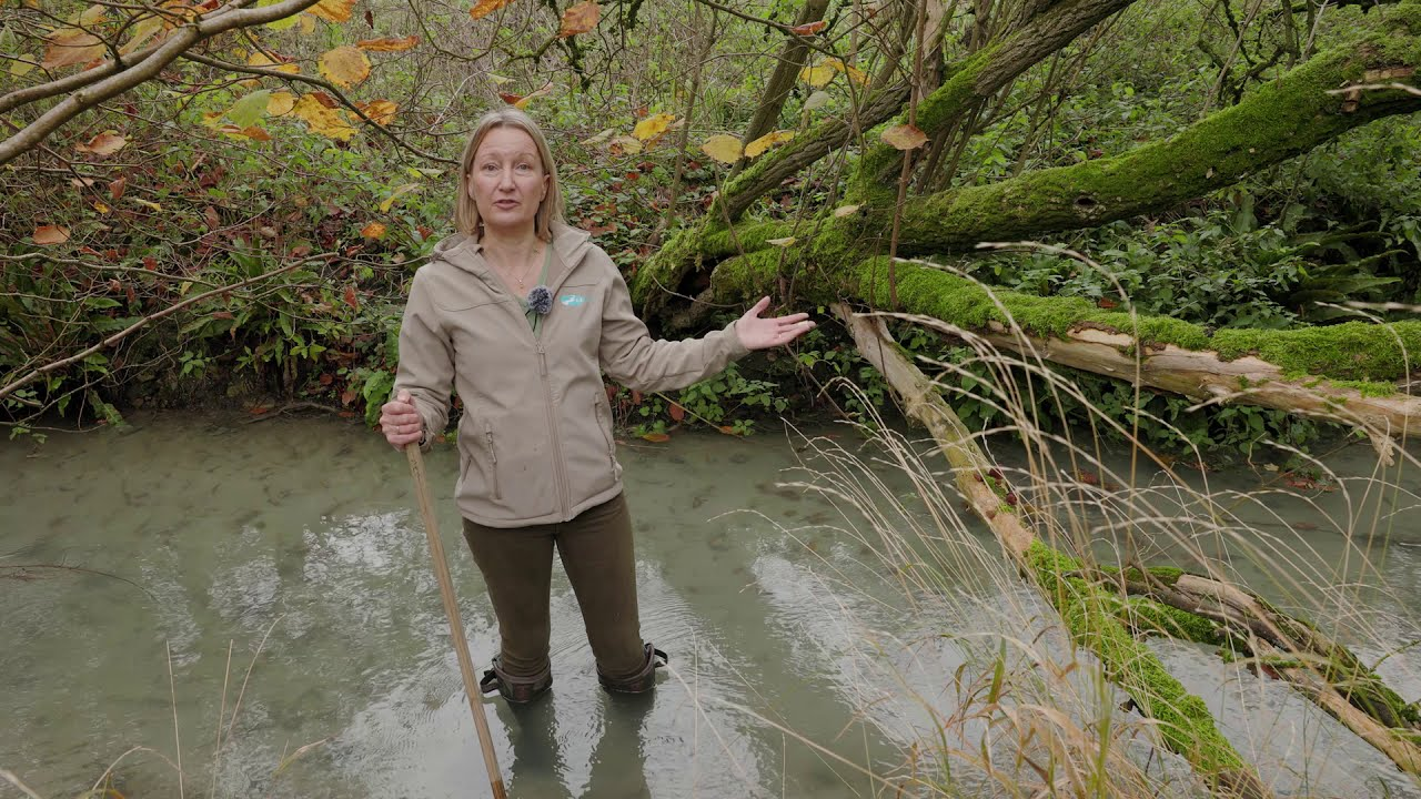 Sparkling Streams - a must watch video from North Wessex Downs AONB
