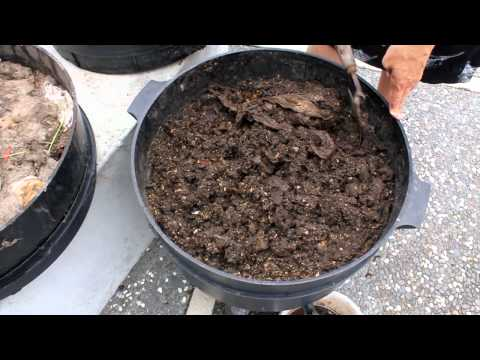 Harvesting Vermicasts from a Worm farm