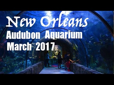 New Orleans Audubon Aquarium of the Americas March 2017