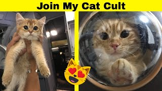 Adorable Photos We Can Use To Make Someone Join A Cat Cult