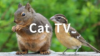 Cat TV: 6 Hours  Beautiful Birds, Squirrels, Nature sounds in Canadian Forest