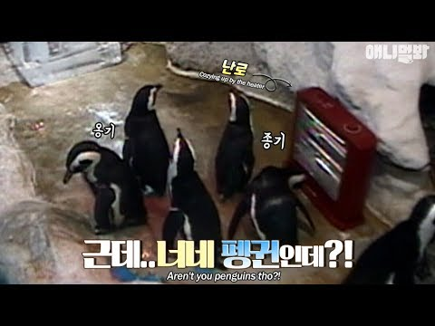 Penguins cozy up by the heater like everyone else during winter lol