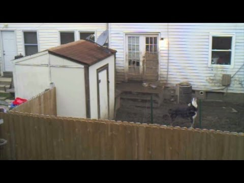 Dog Forced To Live In Small Muddy Backyard Gets a Voice In Heartbreaking Video