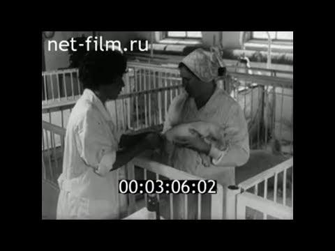 1972г. с.Шорохово. свинокомплекс. Исетский район Тюменская обл