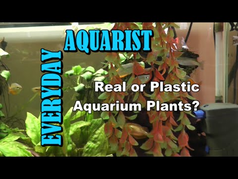 Real Or Fake Plants In Aquariums?