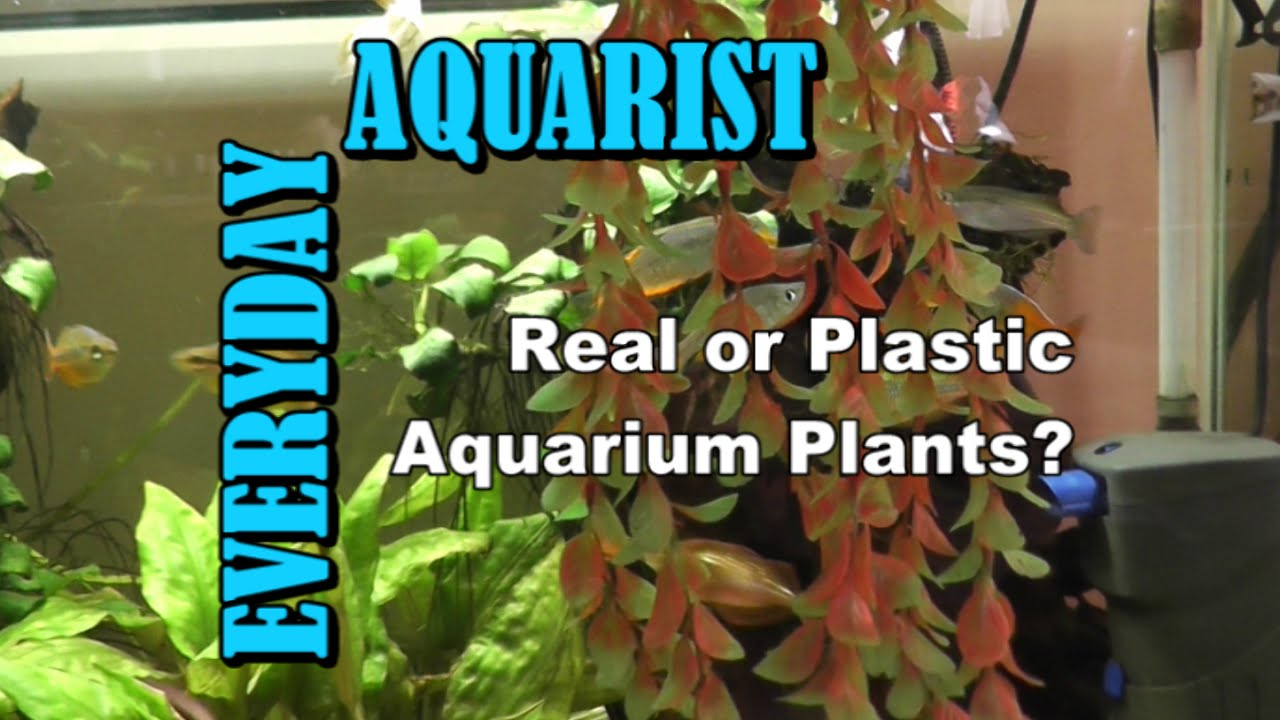 Fish tank real plants - Real Or Fake Plants In Aquariums