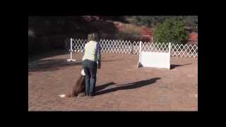 "A Fun Game For Teaching ""mark"" For Utility Go Outs In Obedience"