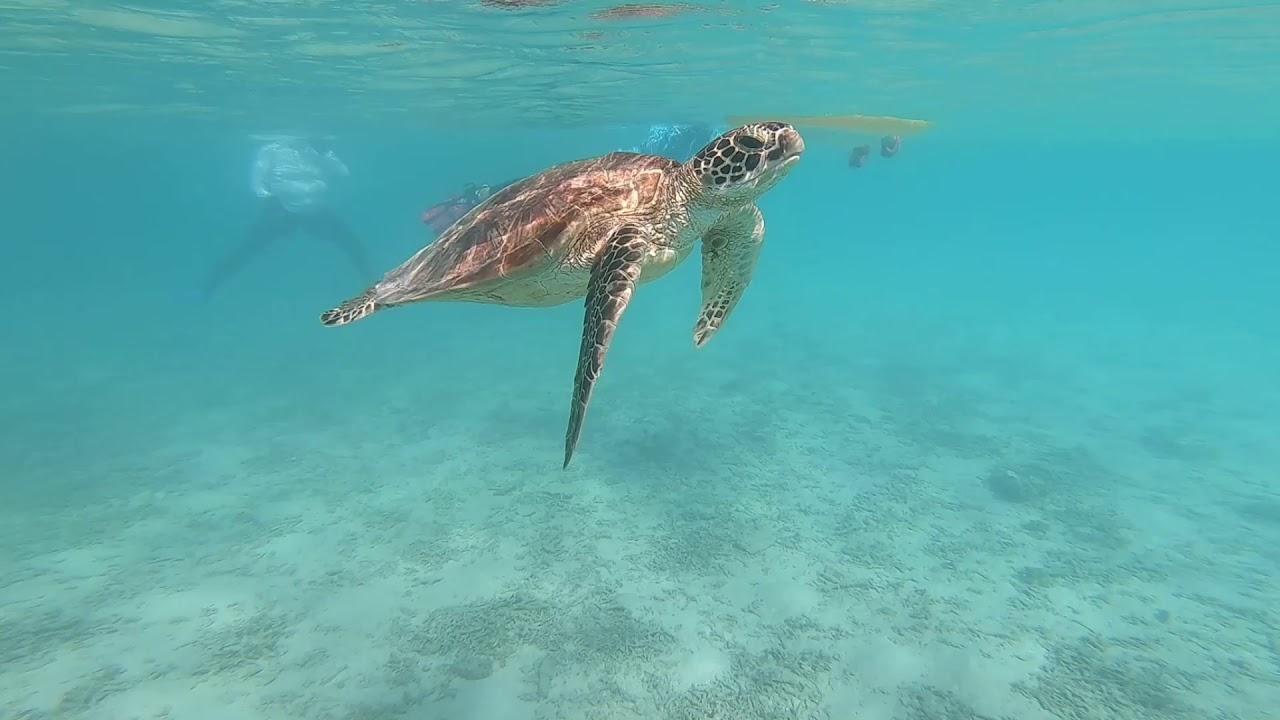トカシクビーチでカメに遭遇