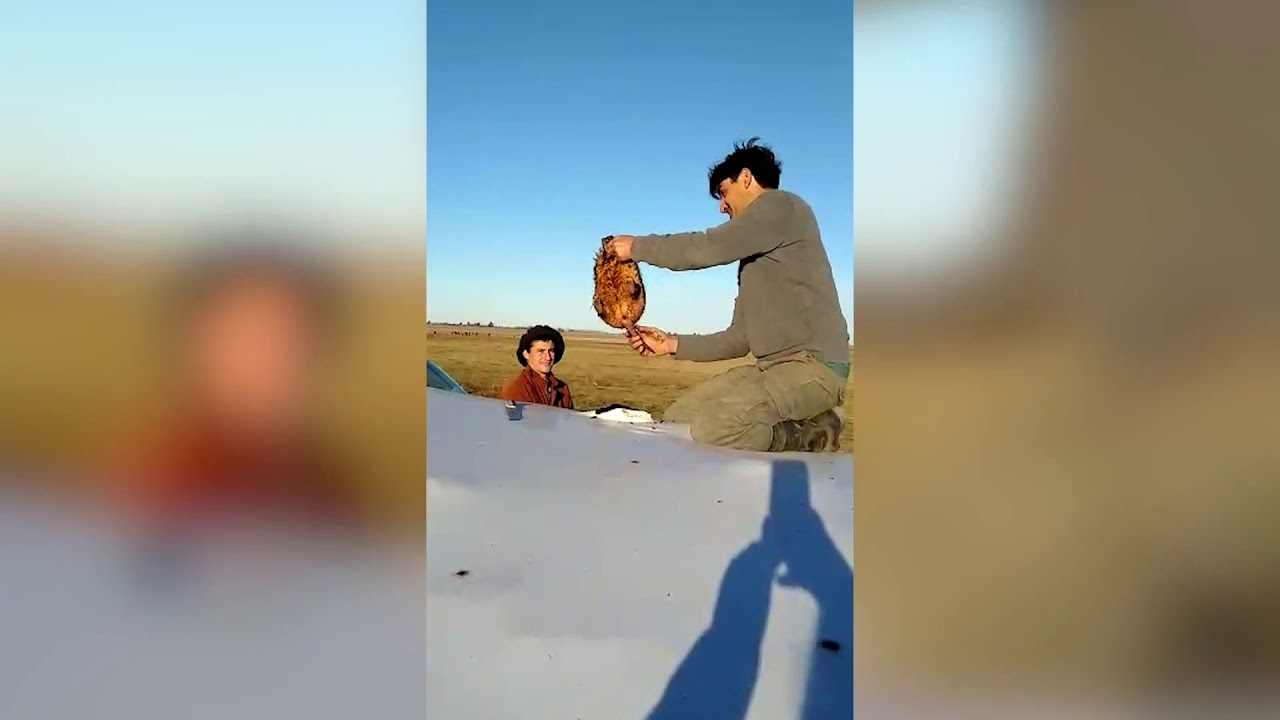 Un video revela el verdadero motivo de roturas a silobolsa