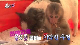 SBS [TV 동물농장] - 5일(일) 예고