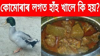 Health benefits of eating duck meat //By RB Tips
