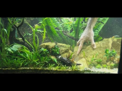 How To Design An Aquarium Working With The Aquarium Plants Youtube
