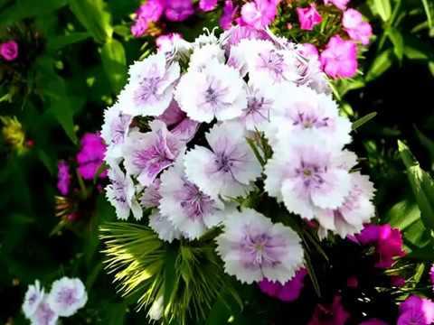 Цветы на даче фото (красивые) смотреть онлайн