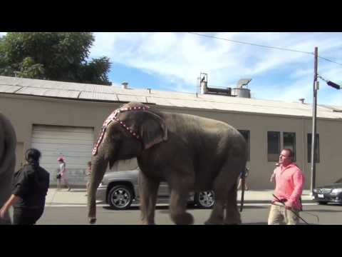 Elephant Shows Fear Of Ringling Bros Circus Handler August