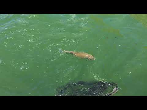 Lake Casitas Fishing Guide 04/19/2018