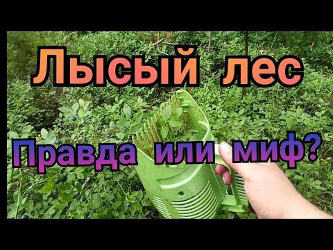Вопрос: Где собирать чернику в Нижегородской области и Нижнем Новгороде?
