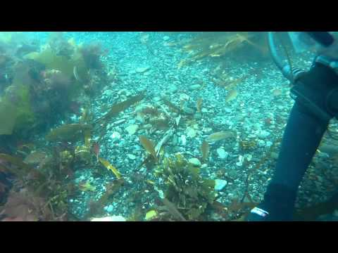 An Open water Sea Trial SCUBA Dive with Kennack Diving 2015