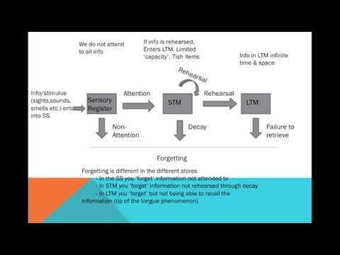 Memory - The Multi-Store Model & Capacity, Duration & Coding
