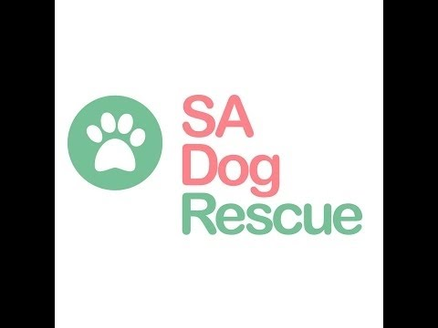 2016 Year in Review - SA Dog Rescue
