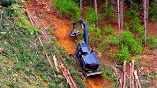 Extreme logging - Winch assisted Tree feller working on a steep slope. Nelson NZ