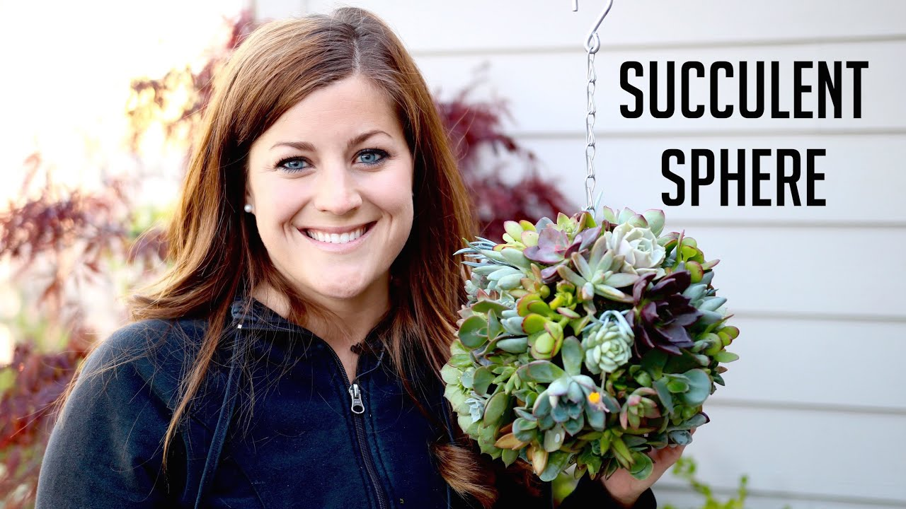 How to Make a Succulent Sphere How