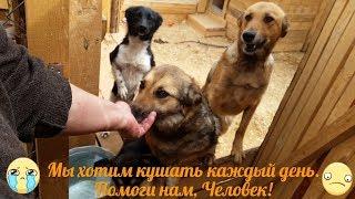 Абсолютная любовь собаки. Правда или вымысел.