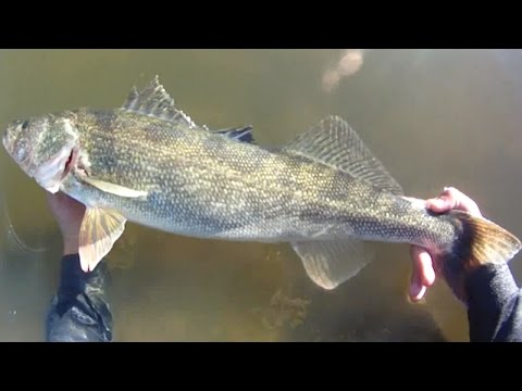 Lure Fishing #96 - Spillway Jig Fishing For Big Walleye And Northern Pike