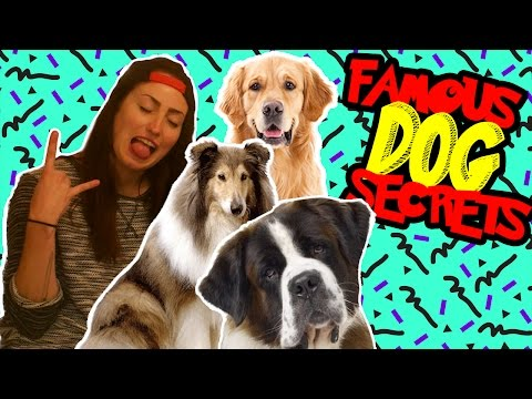 TOP 3 FAMOUS DOGS THAT ARE SECRETLY HUMAN // BRITT'S ROOM | Snarled