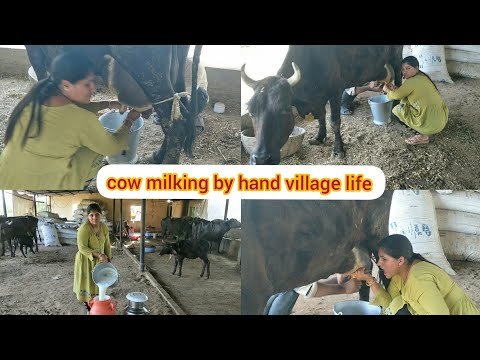 How To Get Young girl cow milking by hand.gujarat dairyfarm. live village life