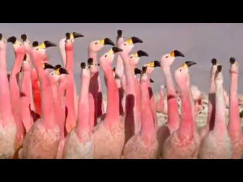 Bird Idol - Walk on the Wild Side - BBC