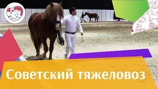 ЛОШАДИ Советская тяжеловозная порода ЭКВИРОС 2016 на ilikepet