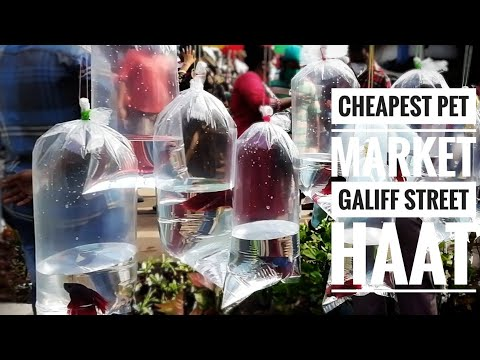 CHEAPEST FISH MARKET |GALIFF STREET |VISIT ON 18.10.2020 |AQUA FINNING VLOG 13