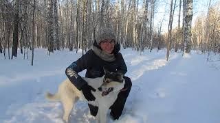 Путешествие в приют Академгородка( собаки)!!!