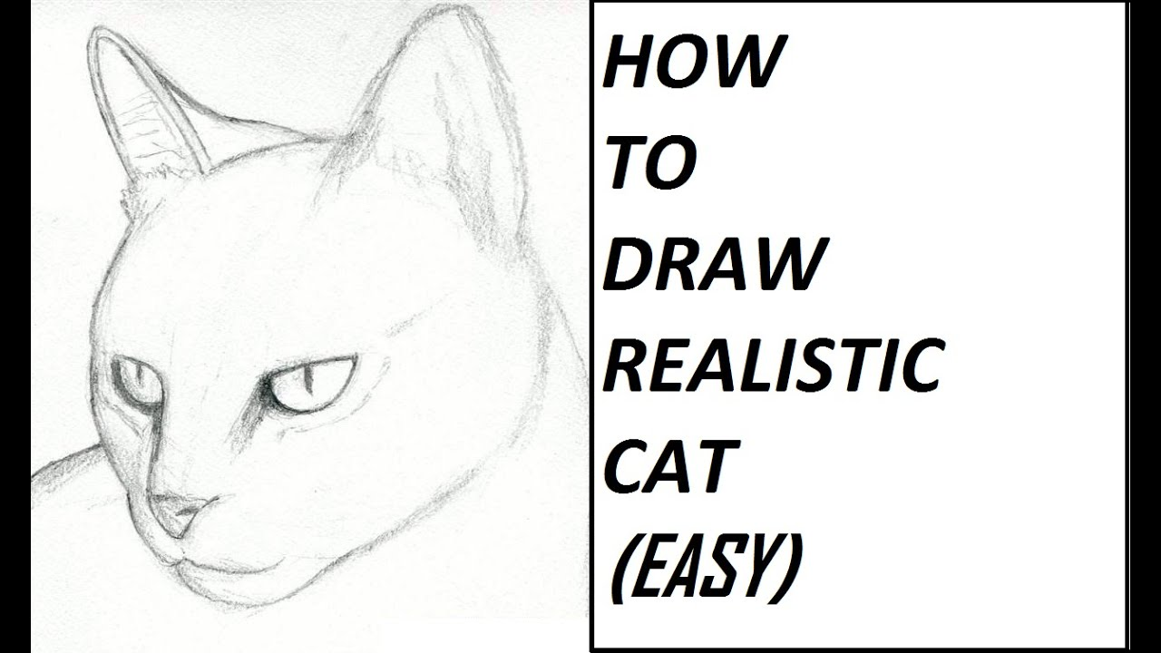 How to Draw - Cat *Realistic* (Easy) - YouTube