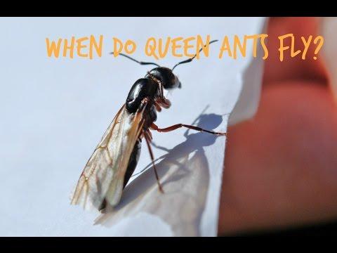 Termites Fumigation Duck Ants Vs Termites