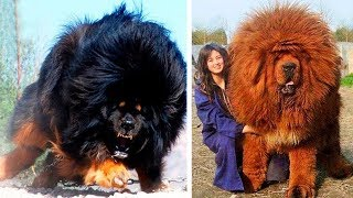 10 Most Expensive Dogs in the World